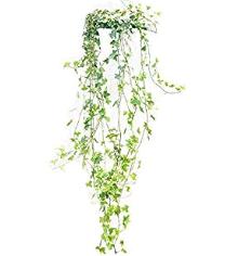 トイレに置くと良い観葉植物は?風水と育てやすさで選ぼう! アイビー