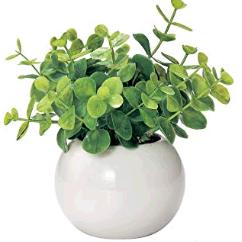 シュガーバイン トイレに置くと良い観葉植物は?風水と育てやすさで選ぼう!