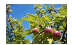 おとぎの国みたいなデンマークの「りんごの島」