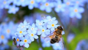 夢占いで蜂を見た時の心理と5つの人生活用術