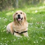 夢占いにおける犬との関係性と10の人生活用術