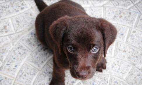 子犬の甘噛みで狂犬病は移る?噛まれた時の注意点